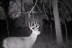 Night View Trail Camera